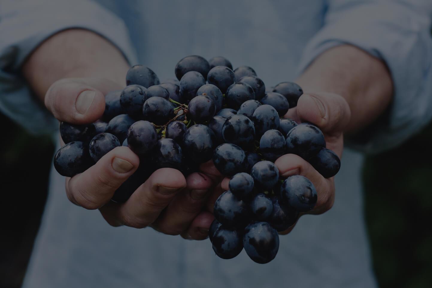 Spanskt rödvin